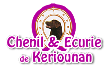 pension canine keriounan