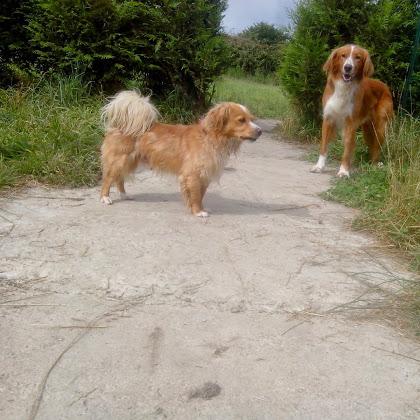 pension canine kersaint plabennec