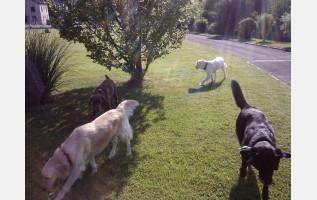 pension canine kogenheim