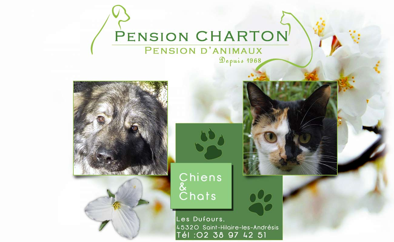 pension chat 89100