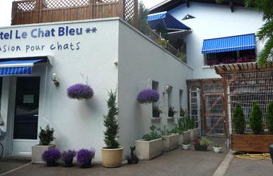 pension chat bleu