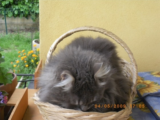 pension chat bruxelles