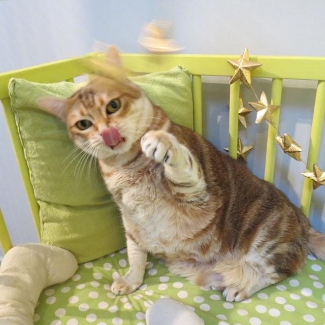 pension chat dolomieu