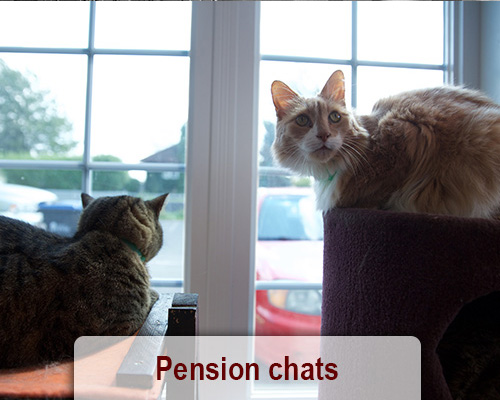 pension chat drummondville