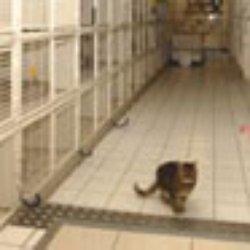 pension chat fontenay sous bois