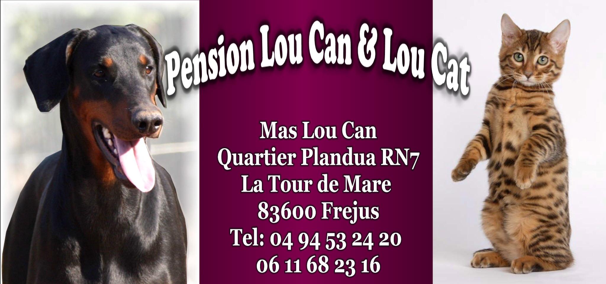 pension chat frejus