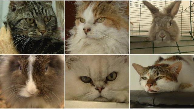 pension chat haguenau