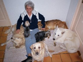 pension chat montelimar