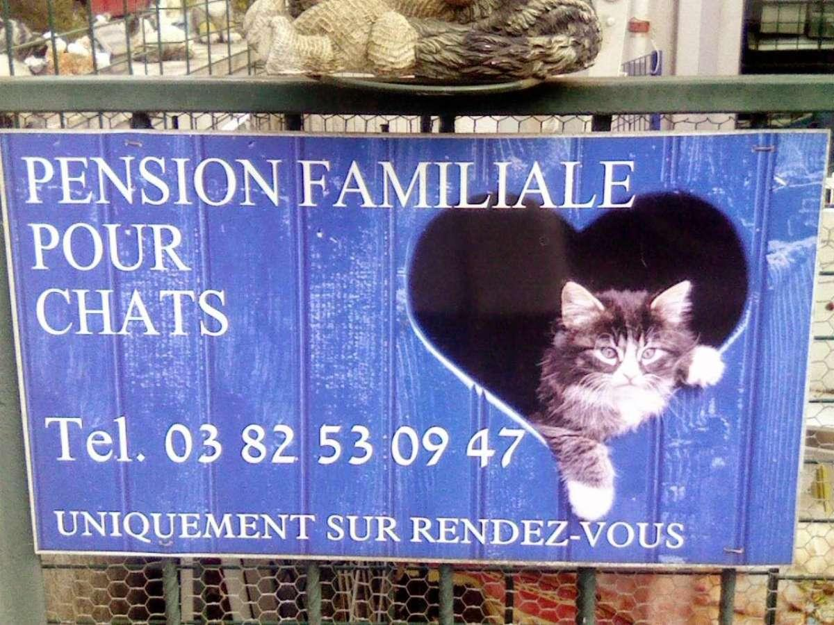 pension chat moselle