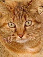 pension chat pruille le chetif