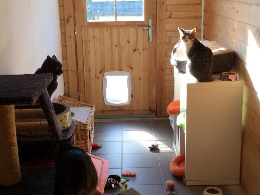 pension chat saint cyr sur morin