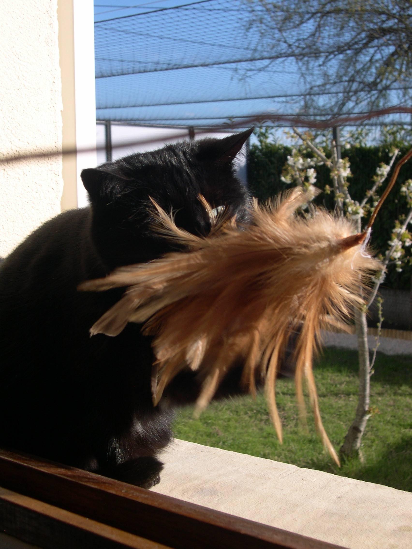pension chat saint quentin la poterie