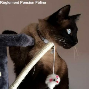 pension chat seysses