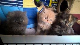 pension chat tinqueux