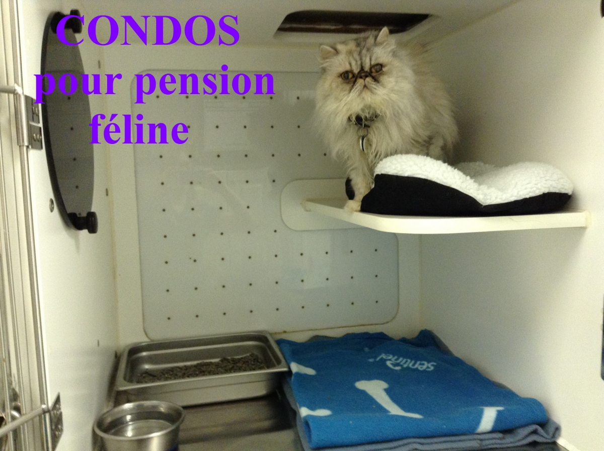 pension chat veterinaire