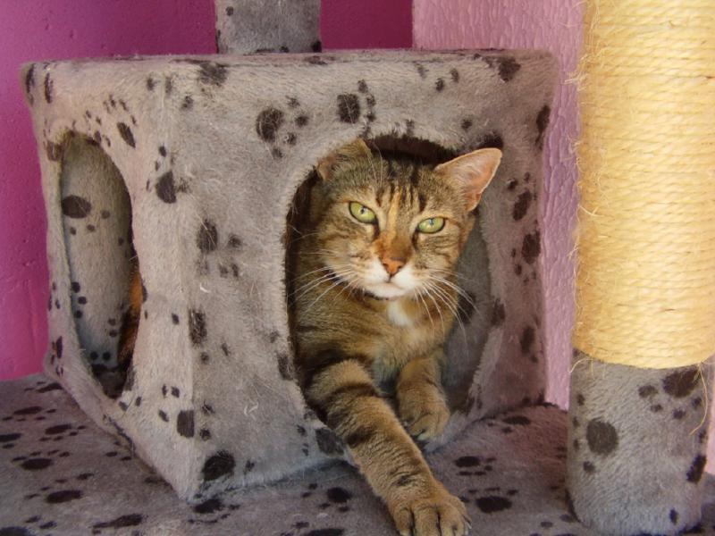 pension chat villefranche sur saone