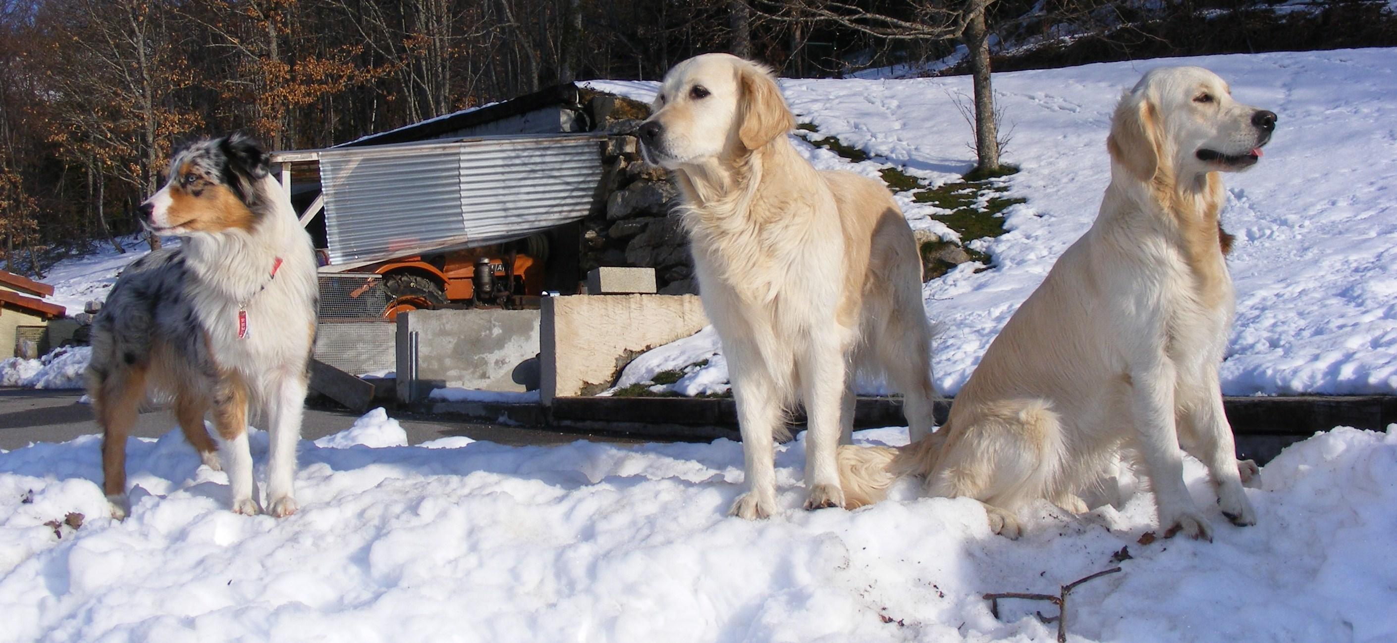 pension chien 01