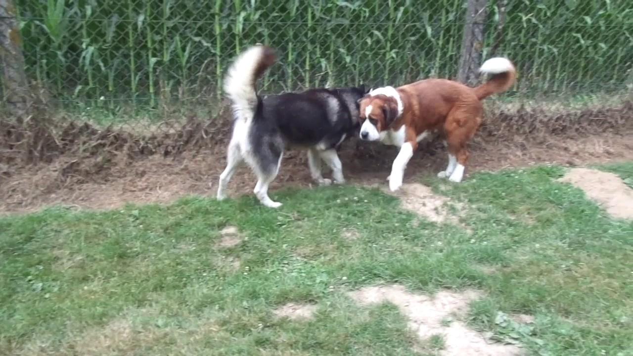 pension chien 07