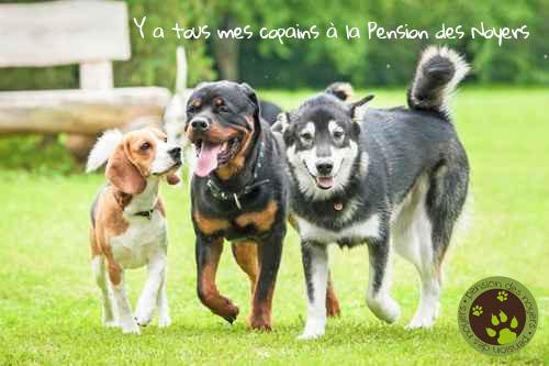 pension chien 11