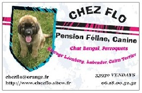 pension chien 17500