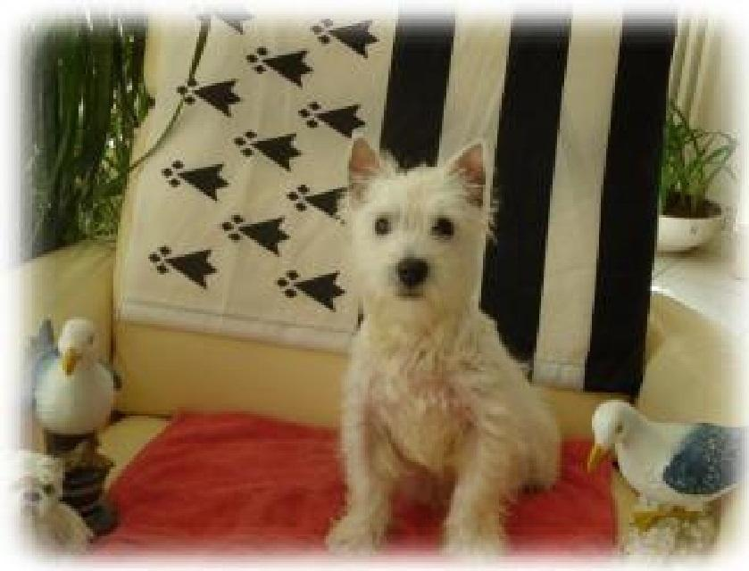 pension chien 22400