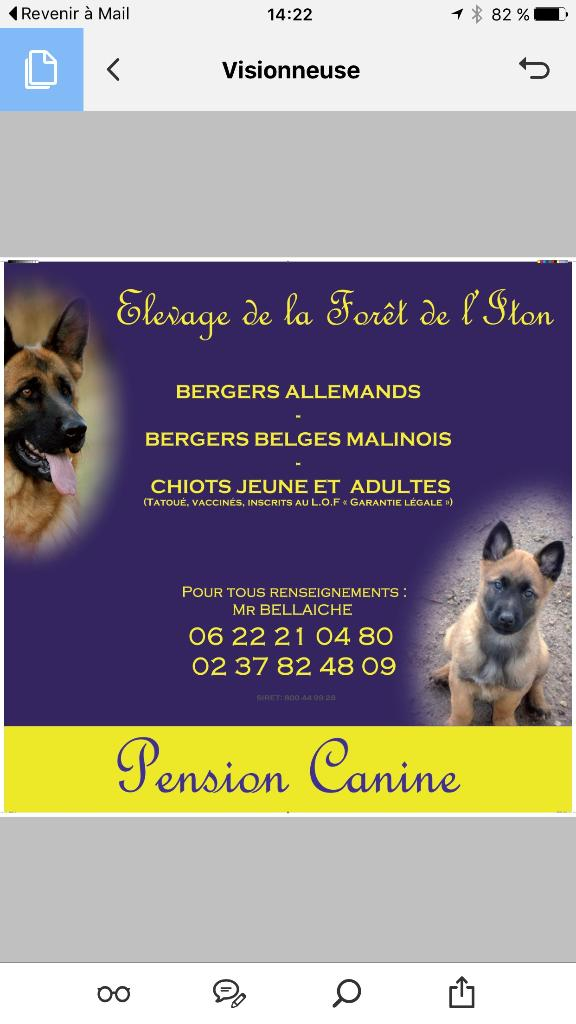 pension chien 28170