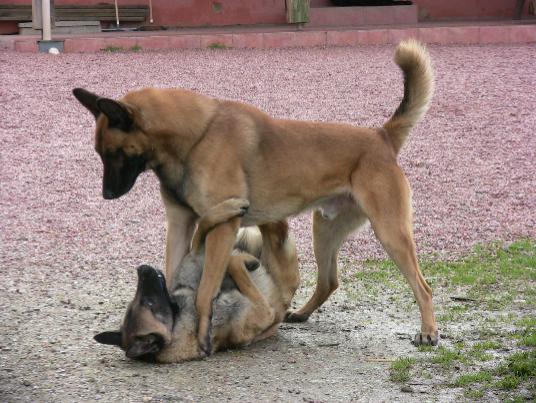 pension chien 31450