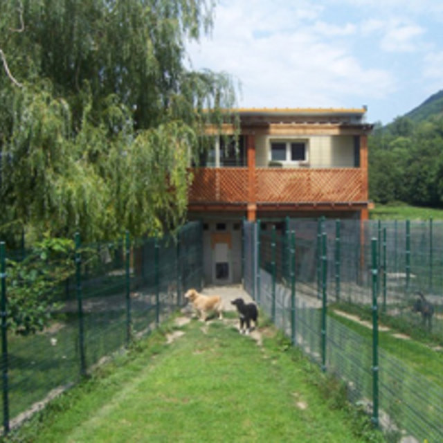 pension chien 31