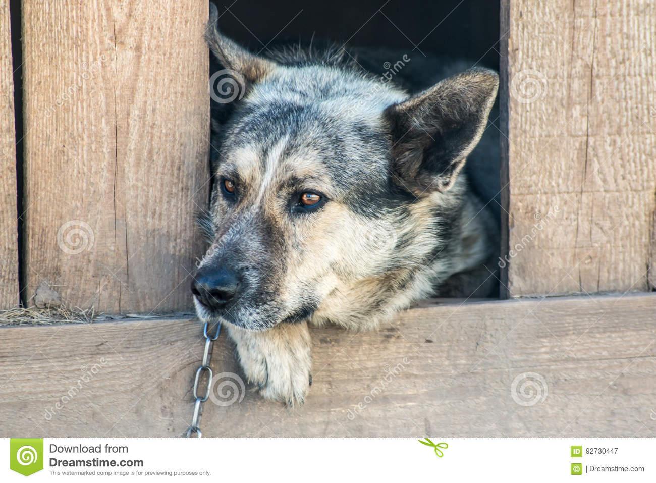 pension chien 47