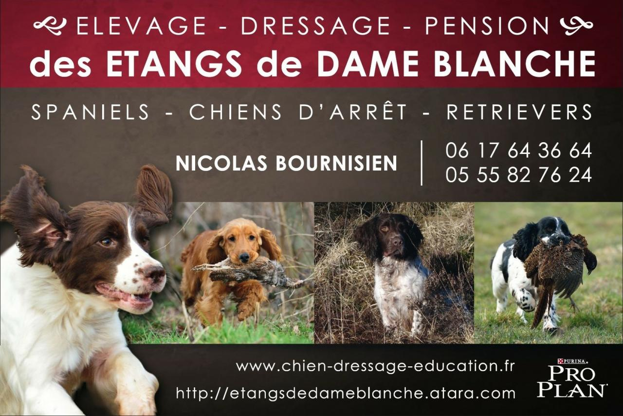 pension chien 64