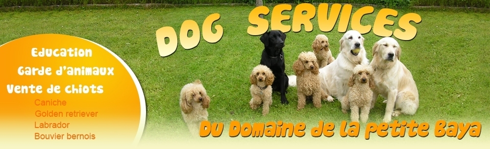 pension chien 71