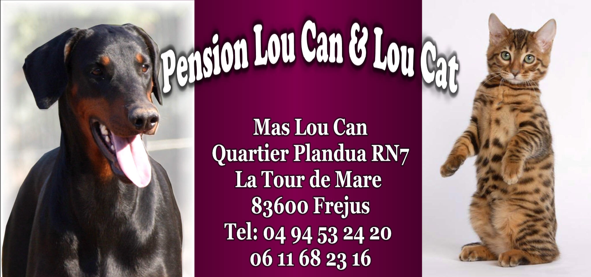 pension chien 83600