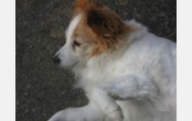 pension chien 95760