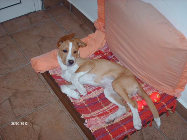 pension chien 974