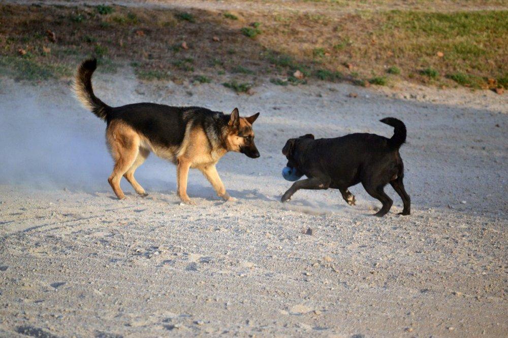 pension chien aix en provence