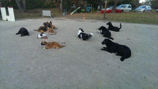 pension chien auriol
