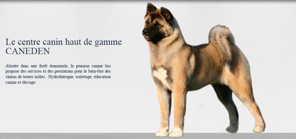 pension chien cannes