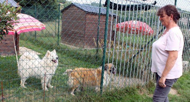 pension chien carcassonne