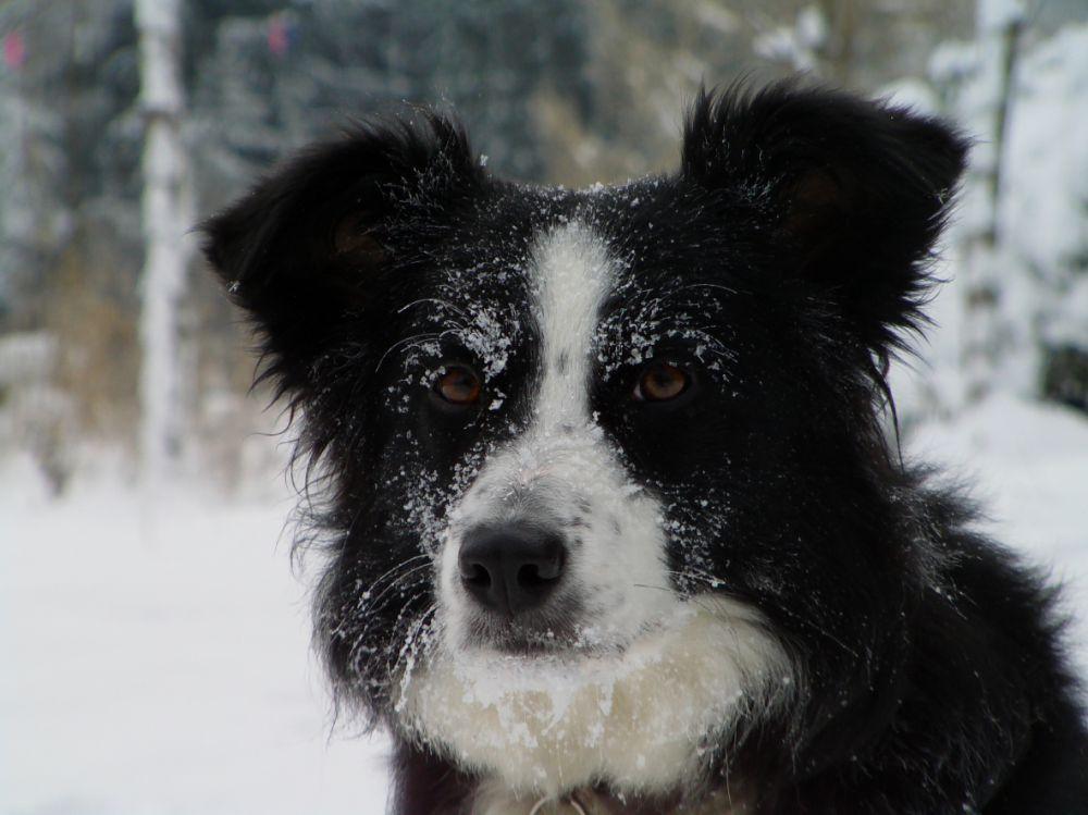 pension chien clermont ferrand