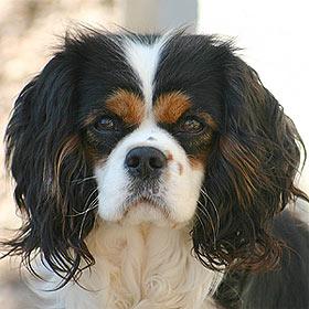 pension chien cogolin