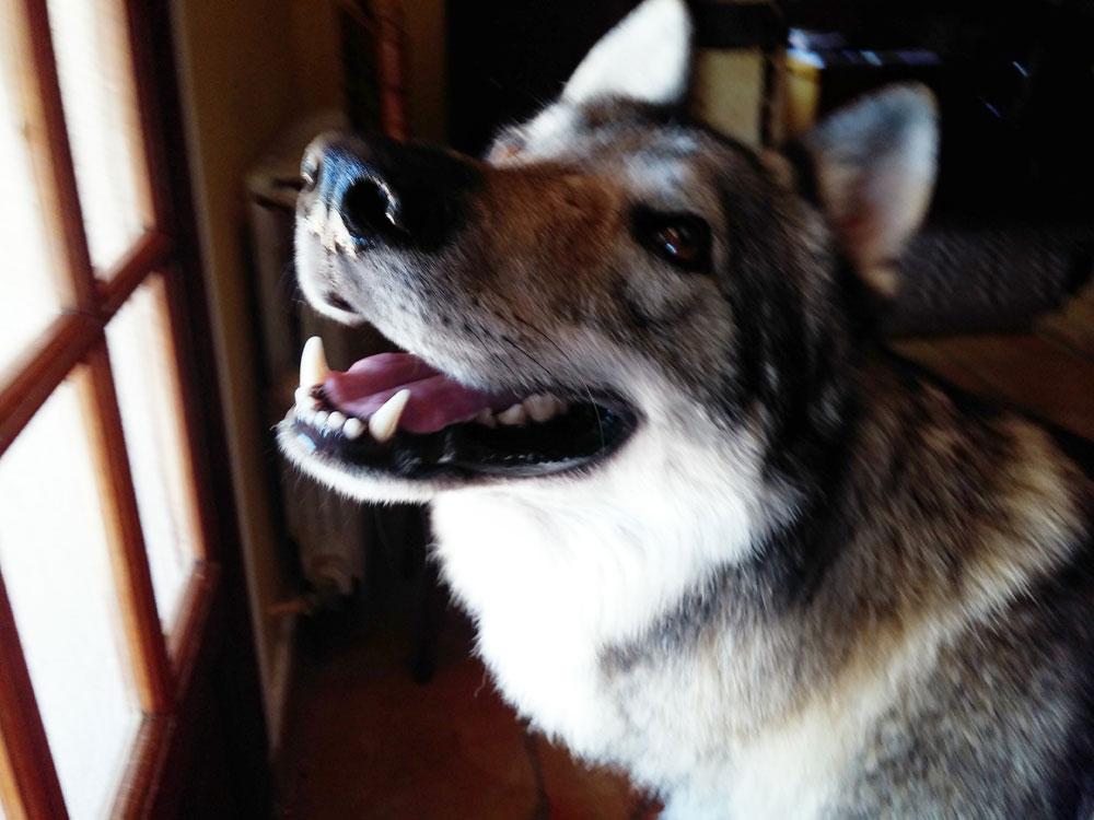 pension chien draguignan