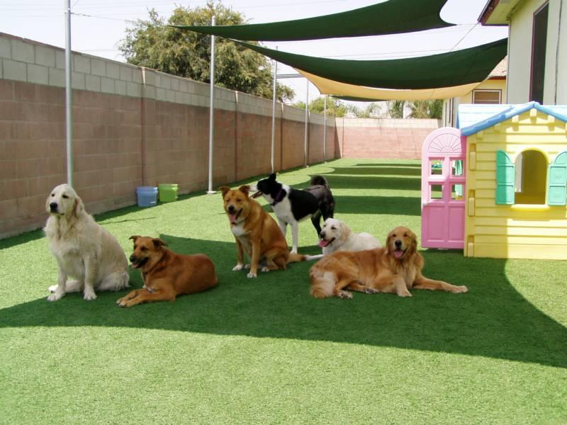 pension chien dressage