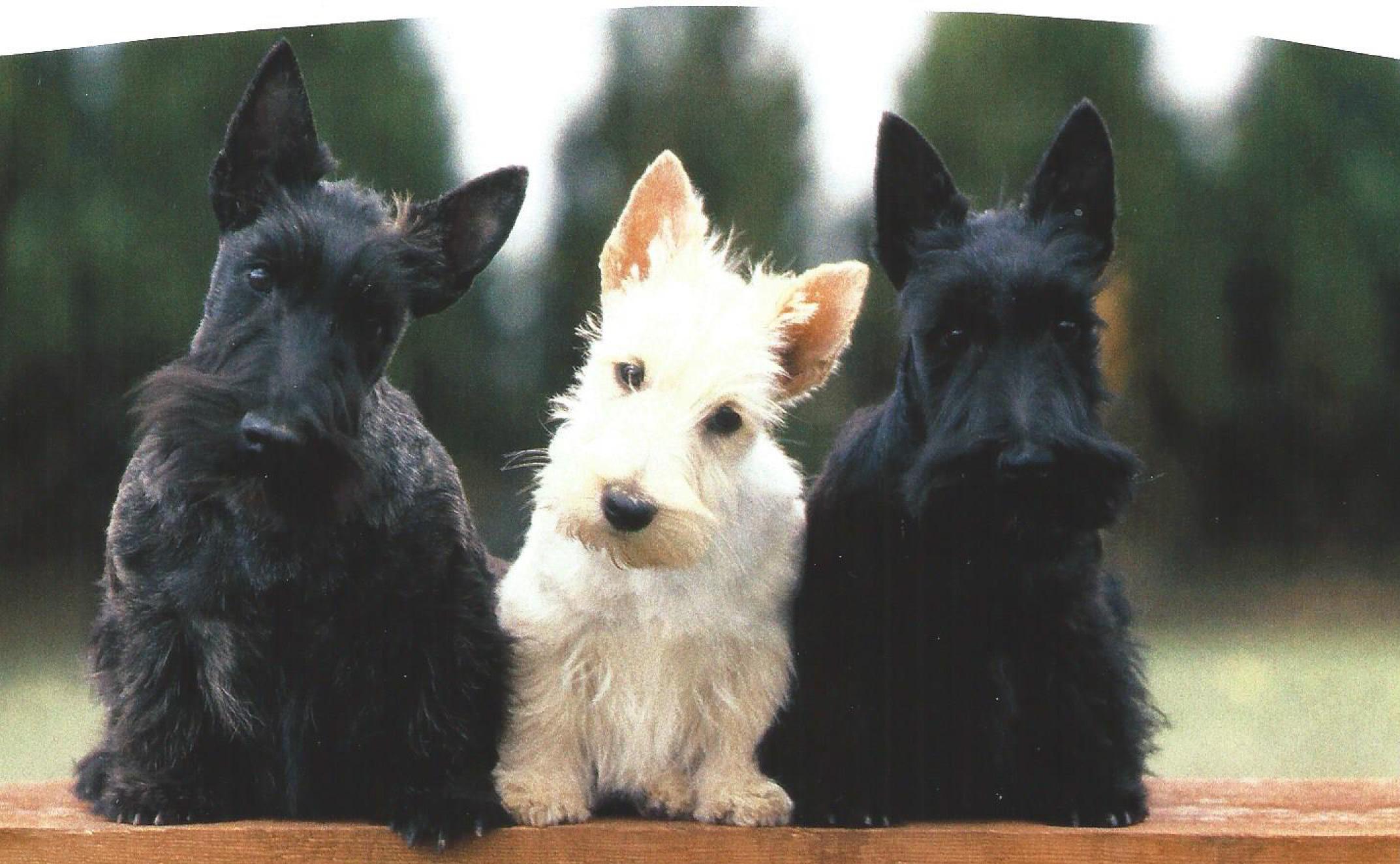 pension chien esvres