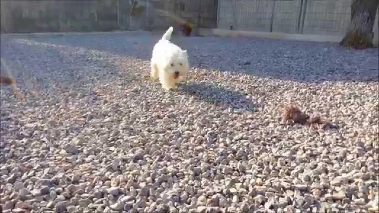pension chien et chat cayron