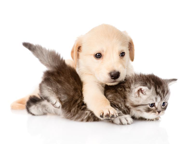 pension chien et chat