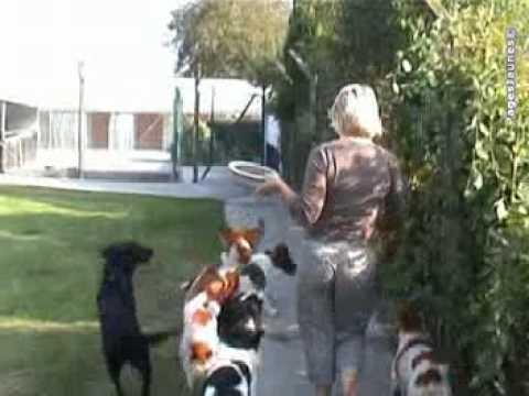 pension chien frelinghien