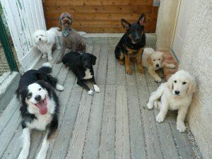 pension chien gard