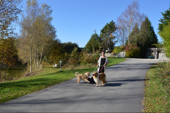 pension chien guidel