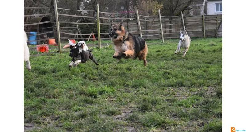 pension chien harnes