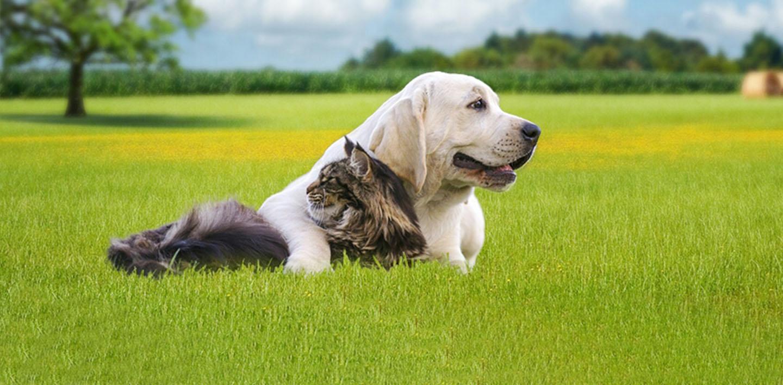 pension chien haute marne